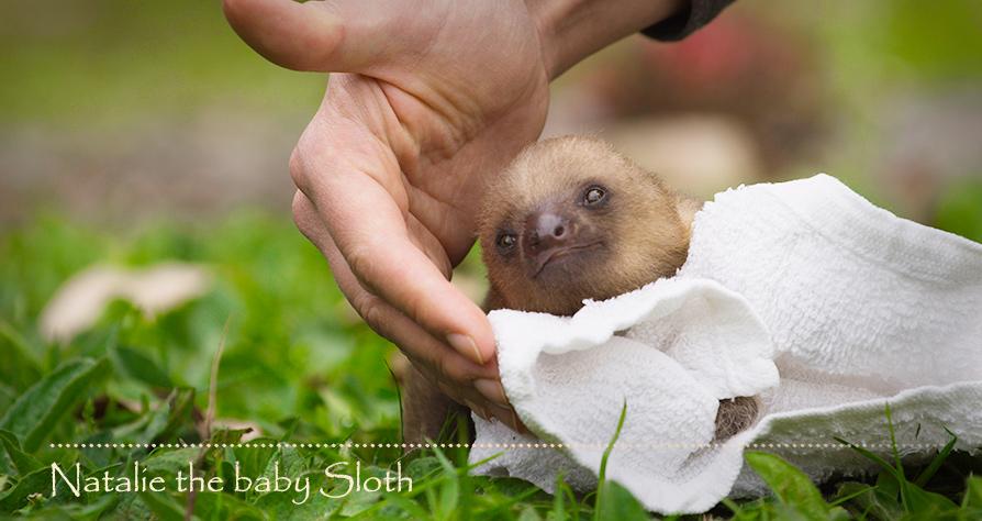 natalie_sloth_web_noborder