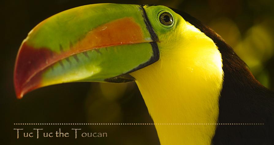 toucan_web_noborder