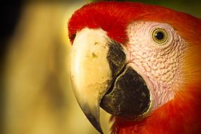 macaw_285_190